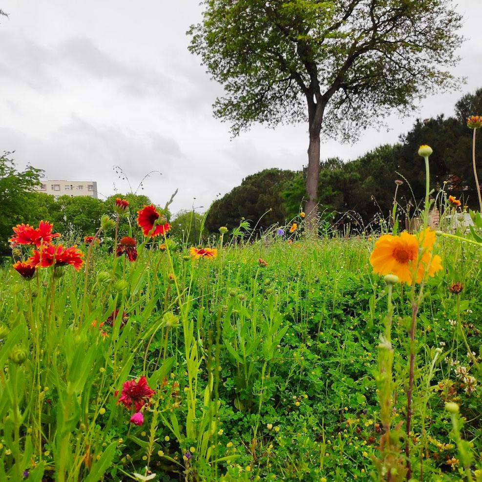 Agriculture urbaine et biodiversité
