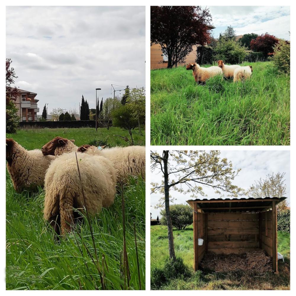 Résidence La Villageoise – Crédit Agricole -2020
