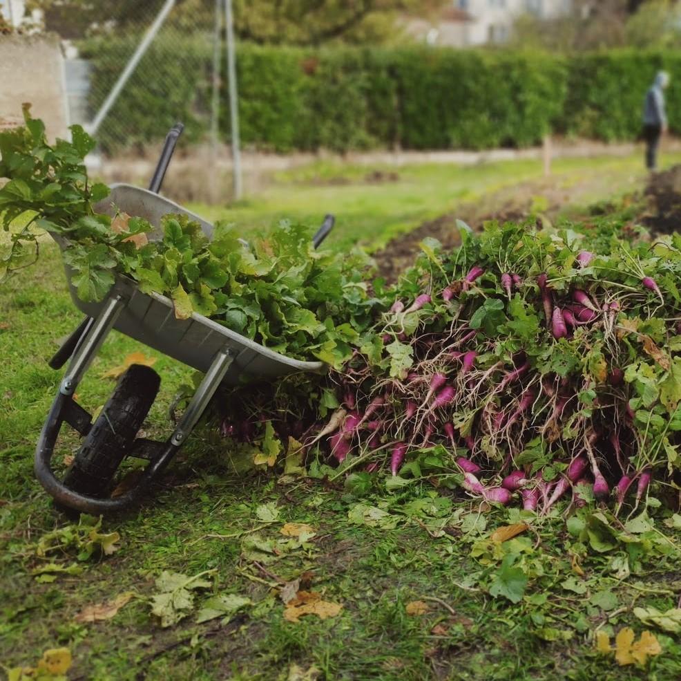 Des légumes frais toute l'année